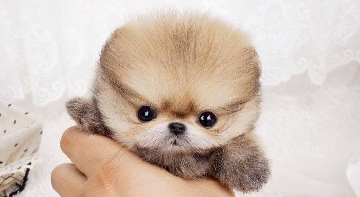 1001 Ideas For Cute Dog Images Proving That Dogs Are Amazing