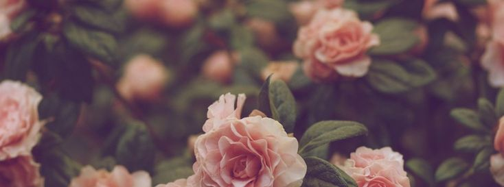 Floral Facebook Covers: 100+ Creative And Beautiful Facebook Timeline Covers