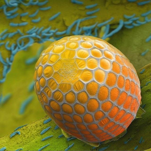 Amazing close-up of a butterfly egg by filmmaker Louie Schwartzberg. Look at that pattern!