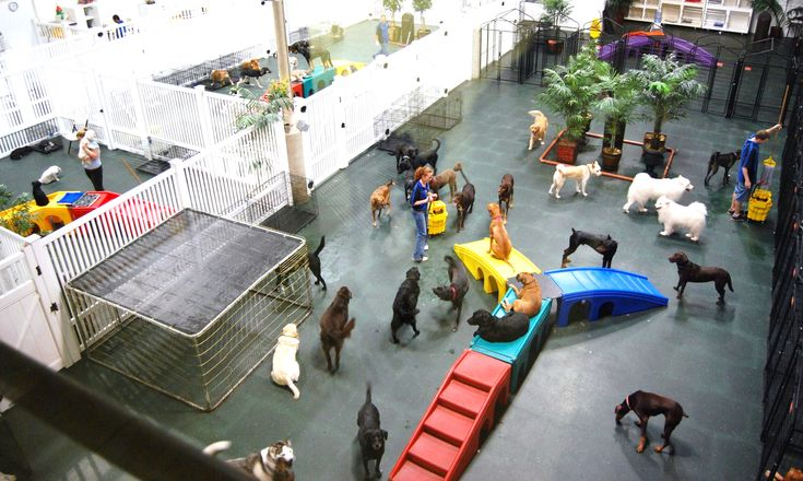 Dog Day Care That Offers Daily Activities And Pampering