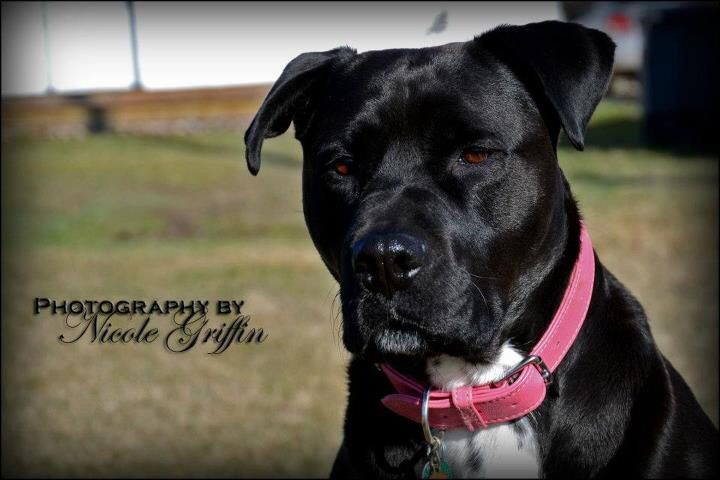 Louie. Miss this big black girl.  Photography by Nicole Griffin