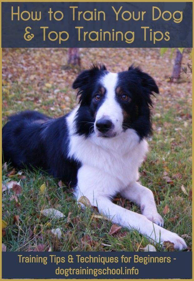 Indoor Dog Training Facilities Near Me Training Your Dog Dog