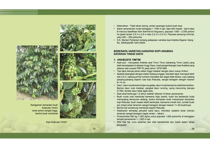 Great Coffee Publication On Growing Coffee In Aceh