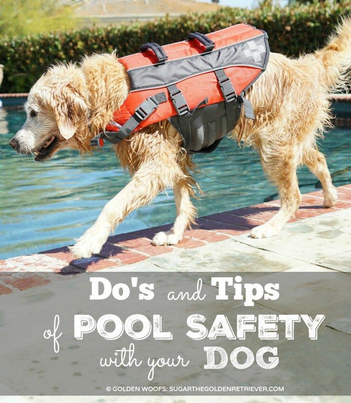 Do's and Tips of Pool Safety With Your Dog