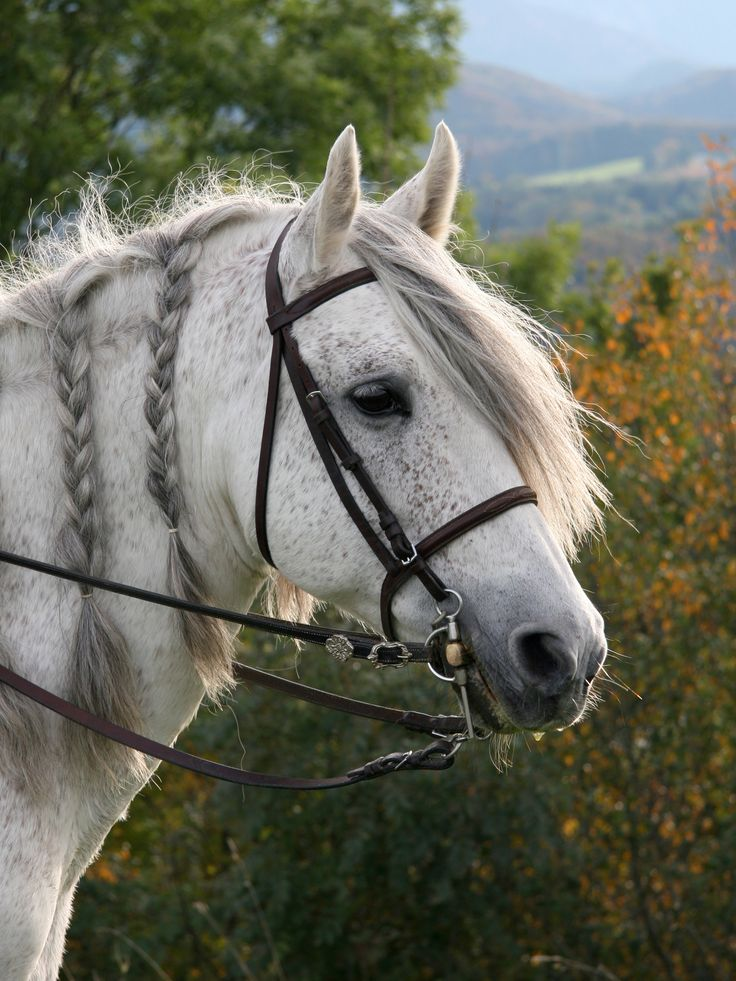 Andalusian horse | Al-Andalus | Pinterest