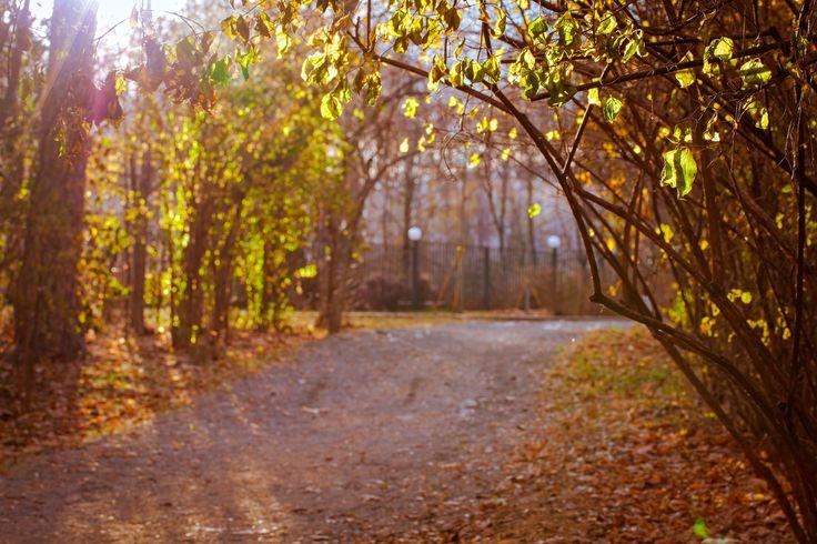 Last autumn sun by Василий Ковалев on 500px