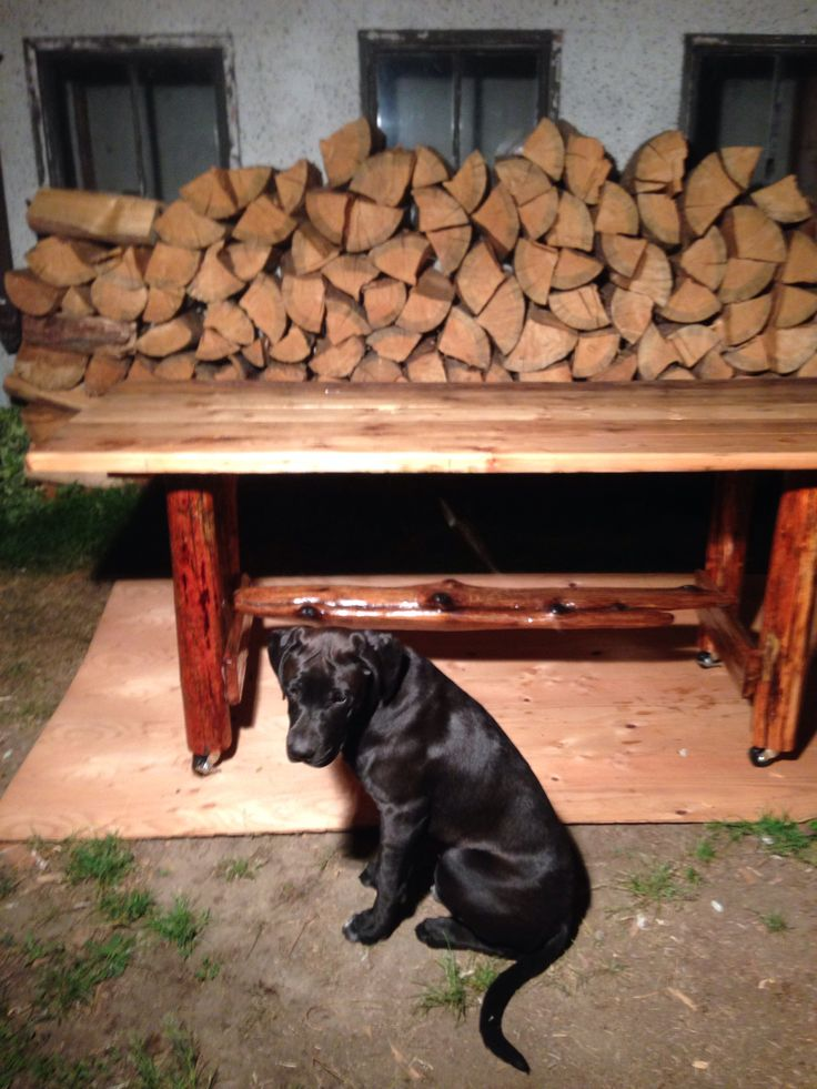 Puppy posing for the photo haha custom made drift wood kitchen table.