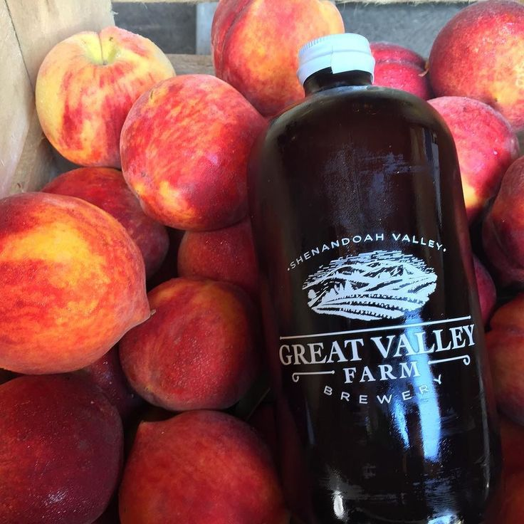 @greatvalleyfarmbrewery just picked up some peaches for a peach beer. Excited to taste the finished product. #peach #craftbeer #drinklocal #peachesarntjustformilkshakesanymore