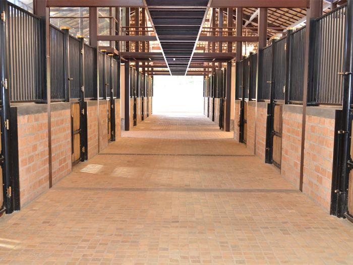 Haras do Drosa - Cavalos , stable , baias , lusitano , kwpn