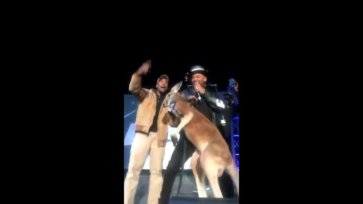 REALLY? MIKE EPPS Accused of Animal CRUELTY After Bringing Kangaroo on Stage! http://colossill.com/really-mike-epps-accused-of-animal-cruelty-after-bringing-kangaroo-on-stage/