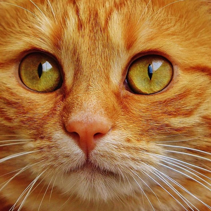 cats_fans_forever Tabby cat pictures, Cat with blue