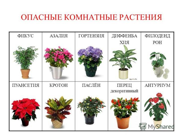 картинка и названия комнатных растений и цветов в интернет магазине край