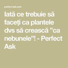 """Iată ce trebuie să faceți ca plantele dvs să crească """"ca nebunele""""! - Perfect Ask"""