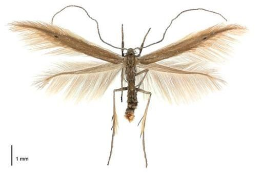 STUDENT ACTIVITY - Identifying bugs -  In this activity, students use the web resource 'What is this bug?' from Landcare Research to identify an insect. This easy-to-use web page allows students to learn more about insects.