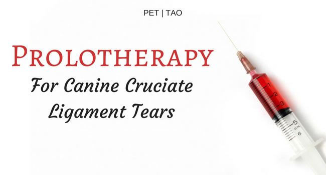Prolotherapy for Cruciate Ligament Tears: What You Need to Know
