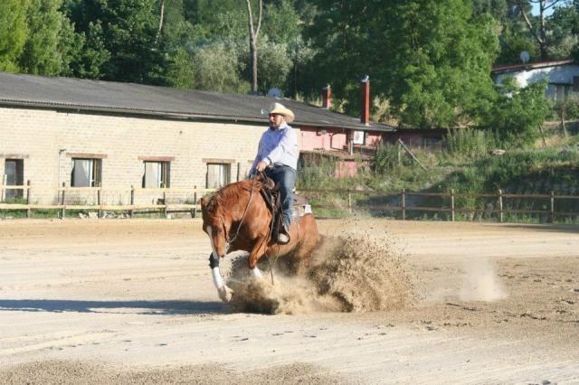Quarter horse femmina 8 anni http://www.equirodi.it/annunci/cavalli-in-vendita/quarter-horse.htm