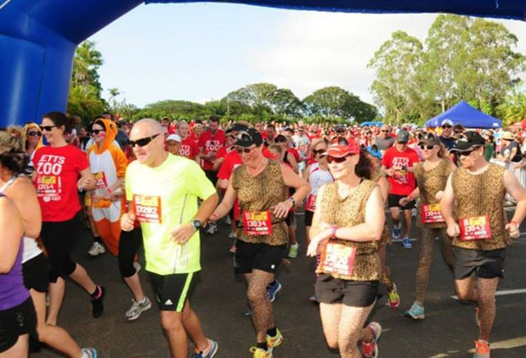 For one day only, Queensland Zoo will visit Bribie Island to take part in the first ever ZOO RUN on Bribie.