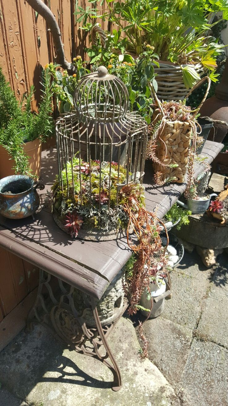 Kleiner Käfig mit Hauswurz