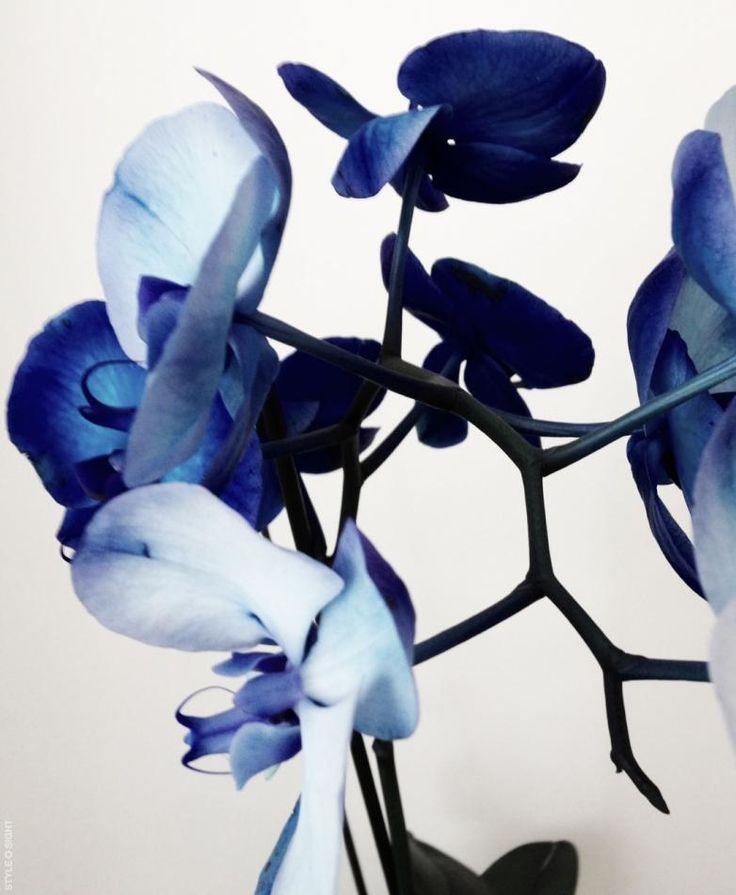 Blue lilies