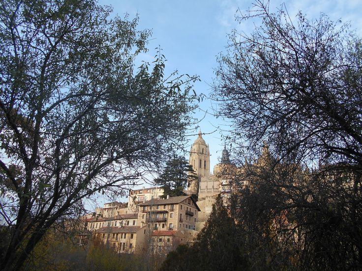 la torre de la Catedral entre lel ramaje
