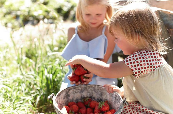 It's National Strawberry Day this Saturday 27th Jan 2016.  Join us for punnets of fun with lots of strawberry treats, a special 'golden berry' hunt and colouring-in for the kids.  There's spot prizes for best dressed, so dress in your fruity favourites and head over to our farm on Saturday!!