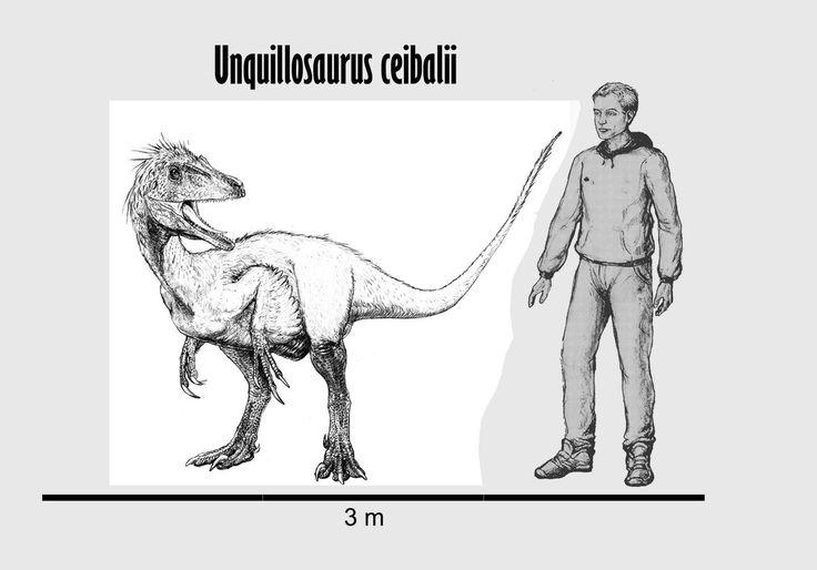 """Ункилозавр (Unquillosaurus, """"речной ящер Unquillo"""") – род Манирапторовых динозавров позднемелового периода, найденный в Аргентине. Данный вид идентифицировали только по находке лобковой кости – длина тела динозавра предположительно составляла 2-3 м. Описание вида Unquillosaurus ceibalii было предоставлено исследователем Jaime Eduardo Powell в 1979 году. Родовое название происходит от названия реки Unquillo, видовое – от города El Ceibal в Аргентине."""