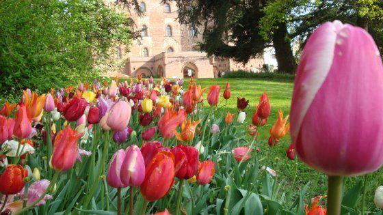Dal 2 aprile al 1° maggio il Castello di Pralormo ospita la tradizione manifestazione floreale