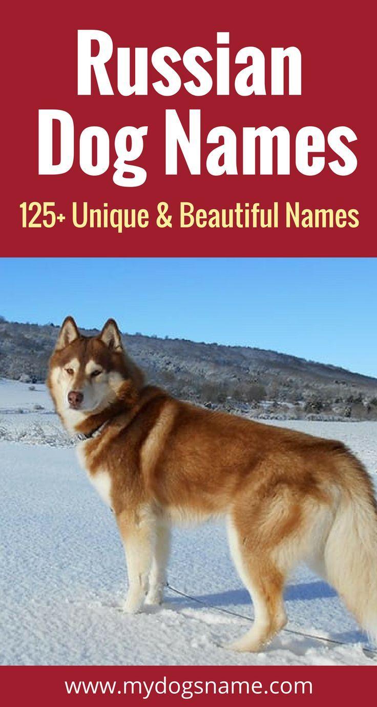 125 Unique Beautiful Russian Dog Names Russian Dogs Dog