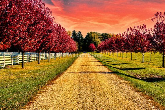 Fall Art fall colors red maple trees red maple leaf Landscape photography Wall Decor wall art Fine Art Print