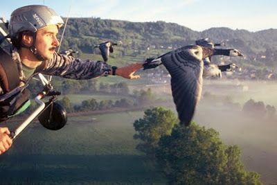 Animalia: Voler avec les oies sauvages, de Christian Moullec