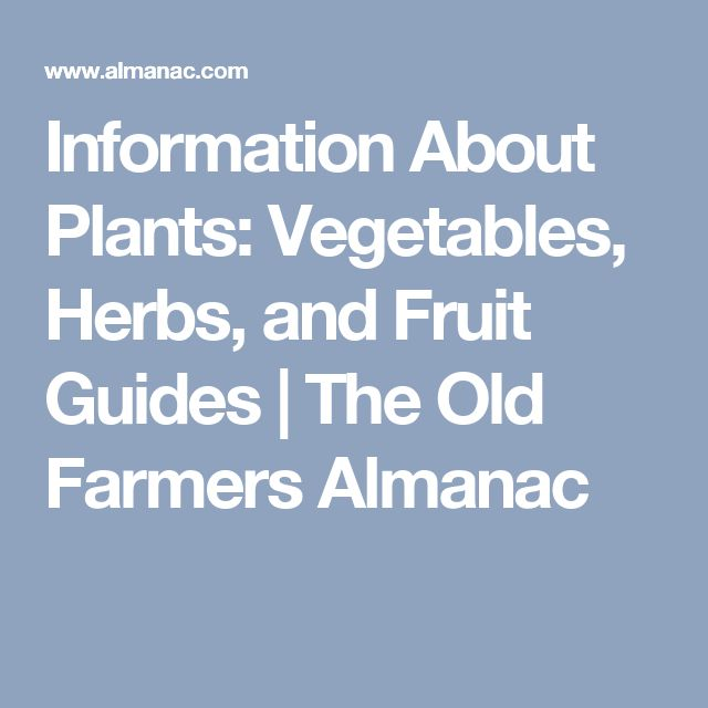 Information About Plants: Vegetables, Herbs, and Fruit Guides | The Old Farmers Almanac