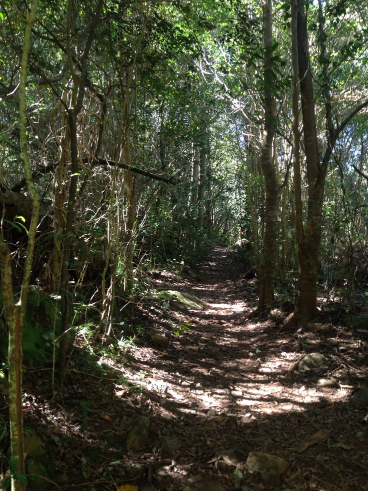 #Forests, Newlands Forest, #CapeTown, #SouthAfrica