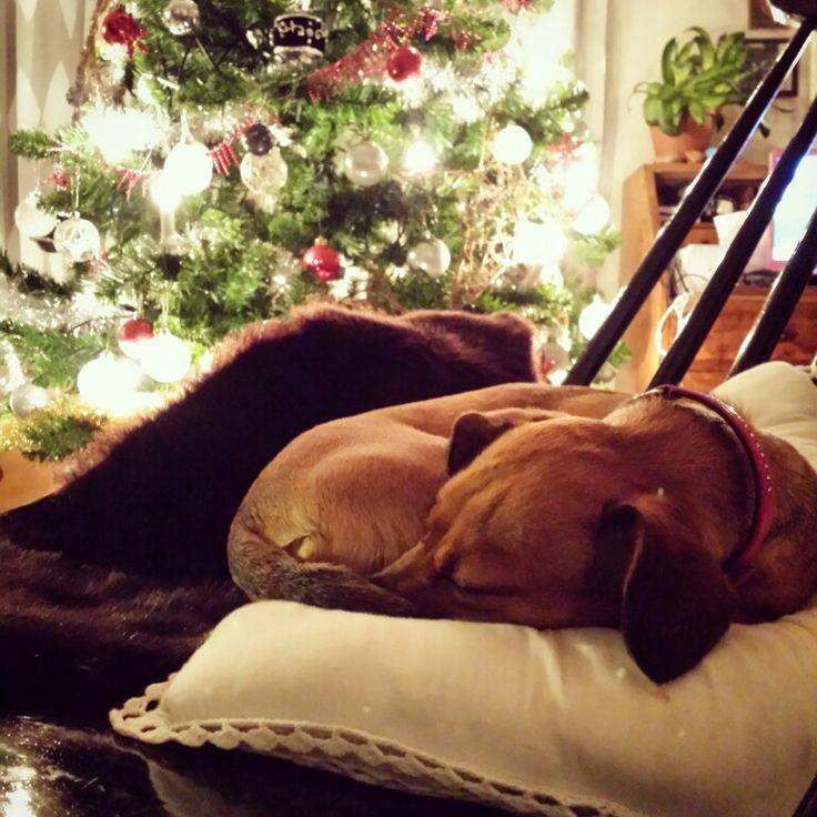 Jouluun rauhoittumista.