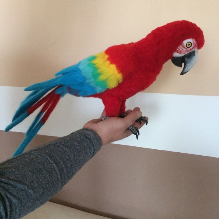 This Ara-parrot is looking for a home. He realy loves people!