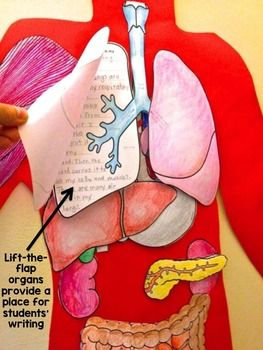This foldable is a great idea for students to understand how the human body functions and where organs are located. This activity can be completed in groups and can be placed around the classroom for students to recall on information. What makes this activity interesting is that students can lift up a cut-out of an organ and read the characteristics and the role it plays in our body. KR