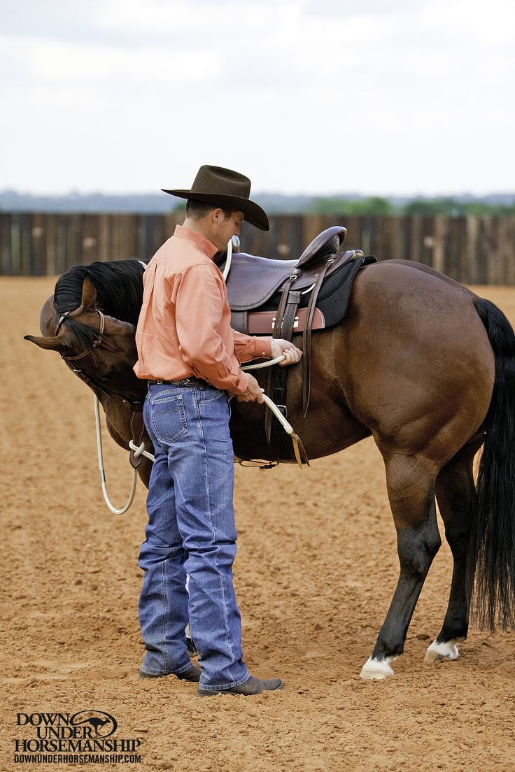 Riding Exercise #7: Touch & Rub Exercise Goal: To be able to bend the horse's head and disengage his hindquarters 360 degrees when you apply very light pressure to his flank area with your thumb. The horse should not pull against the rein while he is moving his feet. More about the exercise: https://www.downunderhorsemanship.com/Store/Product/MEDIA/D/252/