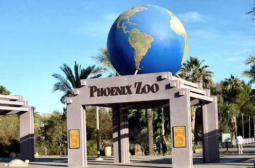 Phoenix Zoo. We took the kids here twice. Our highlights were feeding the giraffes and riding on the camels!