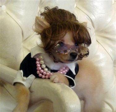 ¿Tienes un perro pequeño y buscas un disfraz muy tierno y original?      Aquí te dejo una pequeña selección de disfraces para perros peque...