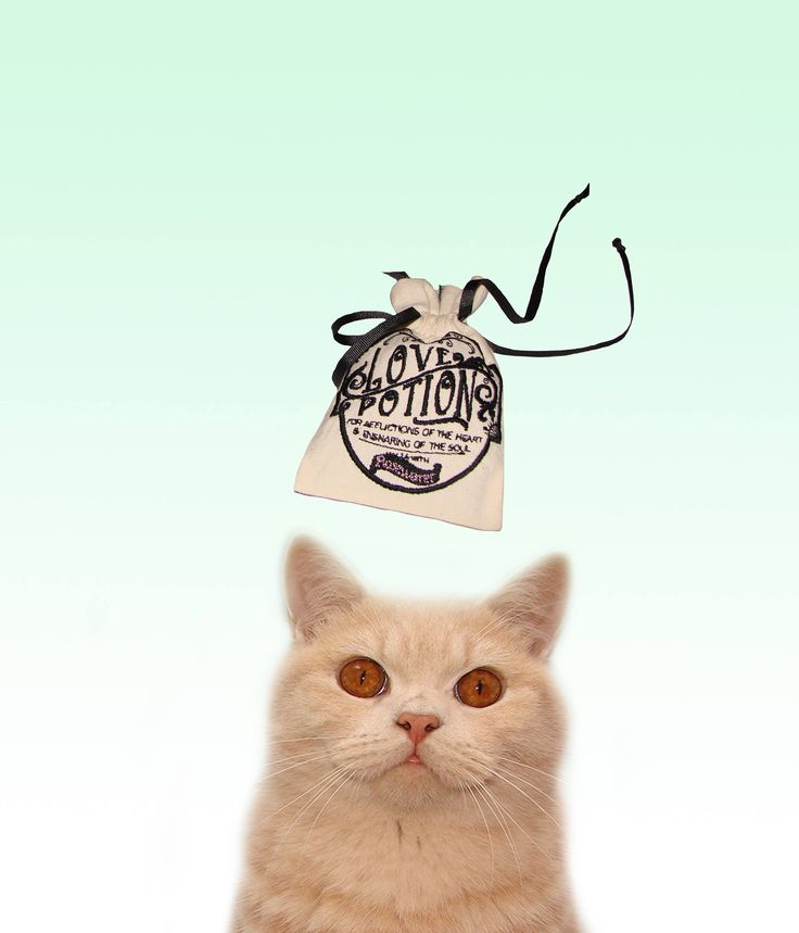 Freak Meowt, Handmade Unique Canadian Catnip Love Potion Cool Cat Toys Gifts for Cats by FreakMEOWt on Etsy https://www.etsy.com/listing/497574210/freak-meowt-handmade-unique-canadian