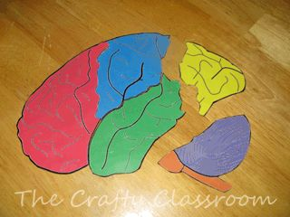 Learning about the Human Body is great fun! Exploring and understanding the amazing structure and   design within the composition of human life, inevitably points to a Creator. Oh what a blessing to be made   in the image of God! Use our crafts, activities and ideas to enhance your science lessons!