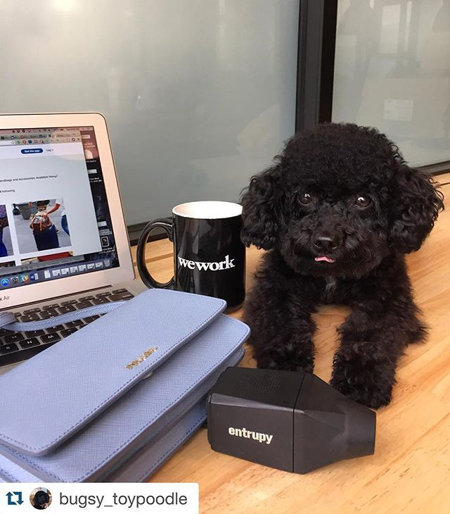 TGIM vibes at WeWork Dumbo Heights. From @entrupy #dogsofWeWork