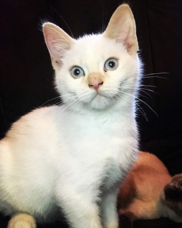 Cats > people   #cat #cats #Diinadaring #catsagram #catstagram #instagood #kitten #kitty #kittens #pet #pets #animal #animals #petstagram #petsagram #photooftheday #catsofinstagram #ilovemycat #instagramcats #nature #catoftheday #lovecats #furry #sleeping #lovekittens #adorable #catlover #instacat