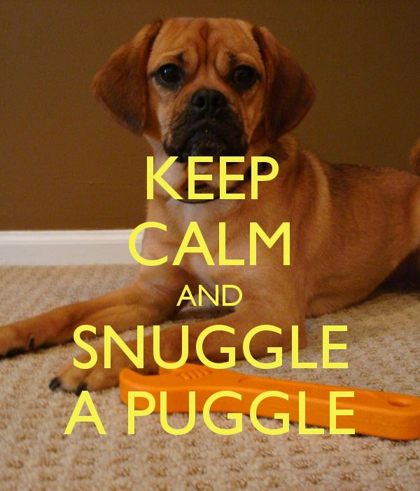 KEEP CALM AND SNUGGLE A PUGGLE