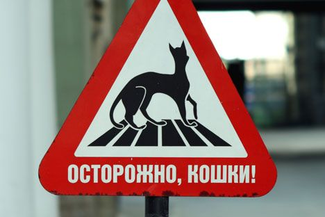 Les chats, gardiens de l'Ermitage   Russia Beyond The Headlines