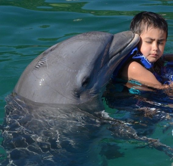 "This cracks me up because the boy is all ""realllyyy dolphin?"" and the dolphin is all ""I'm baaacck"""