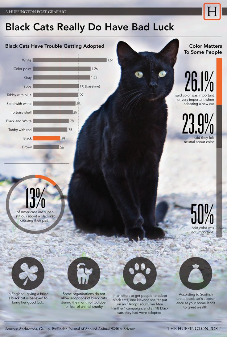 Black Cats Less Than Half As Likely To Be Adopted As Gray Cats. poor black kitties :( i wanna go get one right now #cats