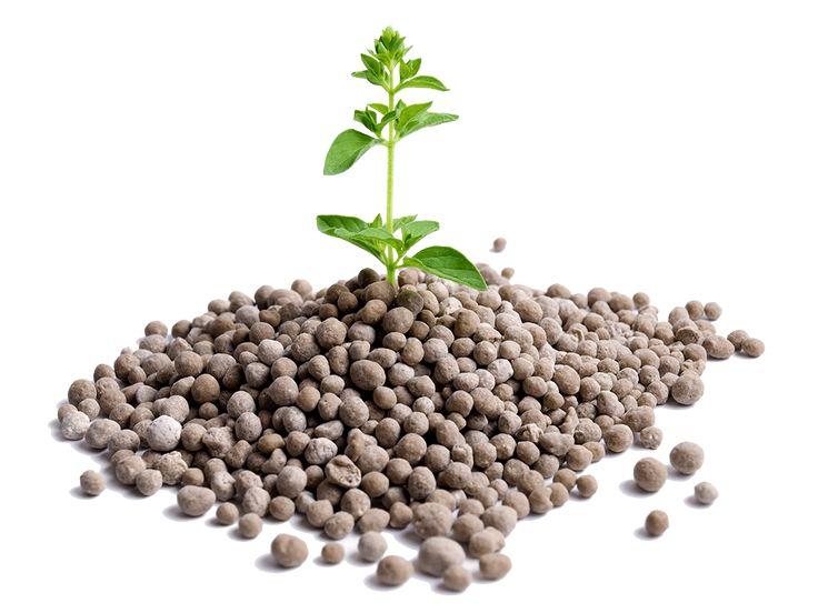 Ποιό λίπασμα ή φυτοφάρμακο είναι το κατάλληλο; Τι πρέπει να προσέξετε! - Which fertilizer or pesticide is good for your plants? What to watch out for!