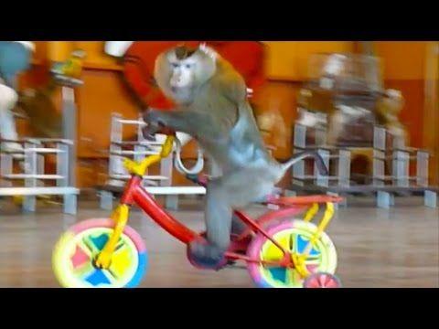 Nội dung chính: Video Con Khỉ [HD]  Xiếc Khỉ  Nhạc Thiếu Nhi Vui Nhộn Hay Nhất  Subscribe : https://www.youtube.com/channel/UC9-b  Fanpage   Bạn đang xem Video Con Khỉ [HD]  Xiếc Khỉ  Nhạc Thiếu Nhi Vui Nhộn Hay Nhất được sở hữu bởi Youtube.com  Hãy tận hưởng cùng chúng tôi bằng việc xem Video Con Khỉ [HD]  Xiếc Khỉ  Nhạc Thiếu Nhi Vui Nhộn Hay Nhất bạn nhé.  Chúc các bạn xem phim vui vẻ với khoảng thời gian là 1484735399 giây.