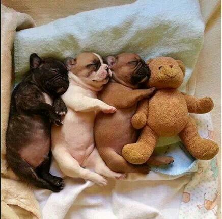 cute or what?! More great pet stuff visit - http://petjunctiondirectory.com/ #ahaishopping repinned by @CosmeticsAficionado