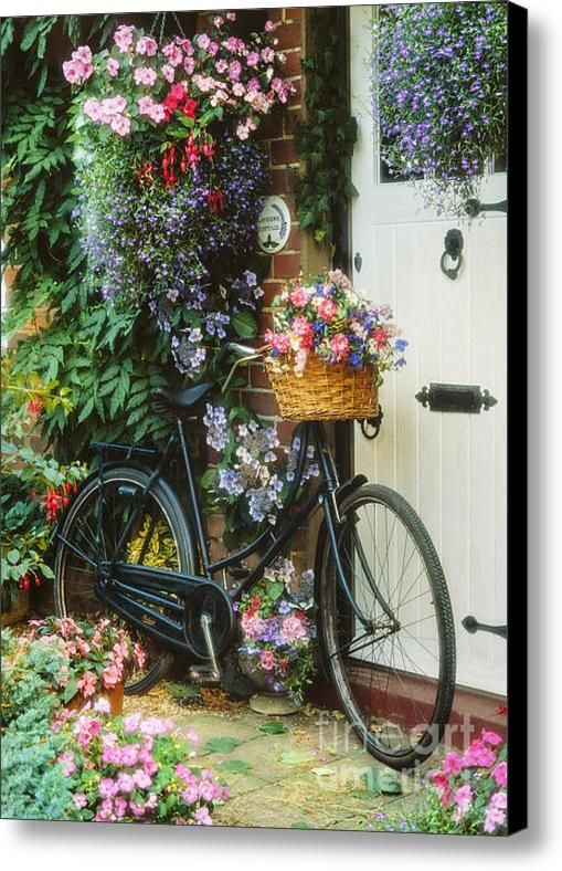 The Bicycle At Lavender Cottage Canvas Print / Canvas Art By Mgl Meiklejohn Graphics Licensing